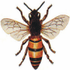 Mountain Empire Beekeepers Association
