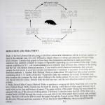 Beekeeping Pamphlet 2